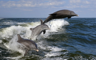 Jim Creighton - Porpoises At Play