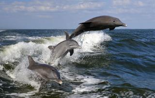 Jim Creighton - Porpoises At Play