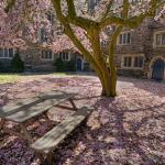 quiet courtyard